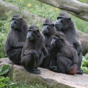 Grupo de monos, todos mirando hacia la izquierda