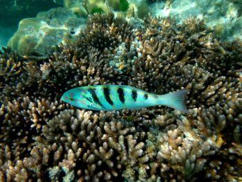 Vida marina en Champagne Bahía, Espiritu Santo, Vanuatu