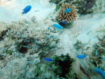 Fauna marina de Champagne Bahía, Espiritu Santo, Vanuatu
