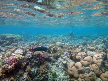 Vida marina de la isla del misterio, Aneityum Vanuatu