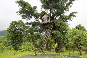 Casa del árbol, Vanuatu
