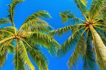 Cuenta corporativa en Antigua y Barbuda