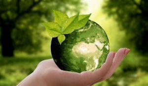Cómo invertir en el medio ambiente: nuestro experto explica un nuevo proyecto rentable
