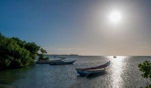 Los mejores precios del mercado: comprar commodities en Venezuela